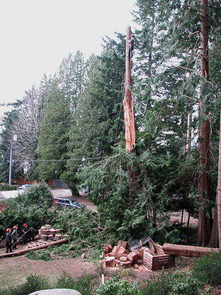 Storm Damage, Tree Service, Sunshine Coast, BC